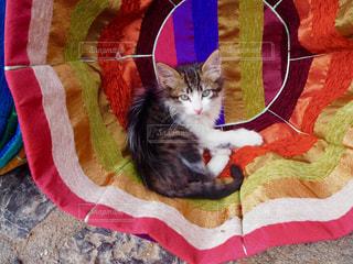 クッションの中の猫の写真・画像素材[1379236]
