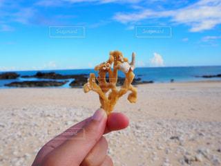 海で見つけた珊瑚の写真・画像素材[1438552]