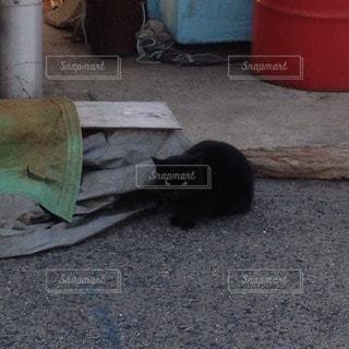 猫の写真・画像素材[52231]