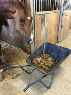 茶色の馬と一輪車の写真・画像素材[1388773]
