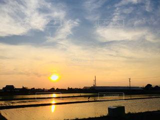 水田に映る沈む夕日の写真・画像素材[1379589]