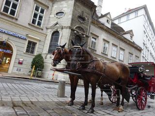 街で馬車馬に乗る男の写真・画像素材[1379924]