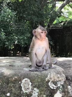 岩の上に座っている猿の写真・画像素材[1380133]