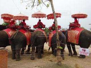 象の背中に乗っている人々 のグループの写真・画像素材[1380164]