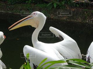 近くに鳥のアップの写真・画像素材[1380181]