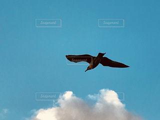 カモメと青空の写真・画像素材[1422534]