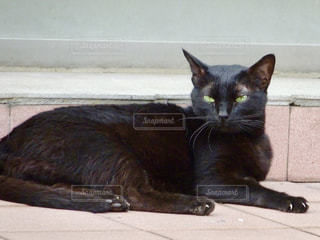 黒い猫の写真・画像素材[1450875]