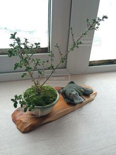 カモノハシとミニ盆栽の写真・画像素材[1380046]