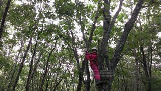 木登り体験の写真・画像素材[1380307]