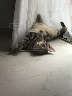 床に横になっている猫の写真・画像素材[1380674]