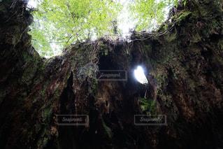木漏れ日の写真・画像素材[1383214]