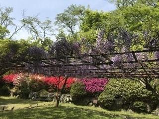 緑豊かな緑のフィールドの上にピンクの花の木の写真・画像素材[1380759]