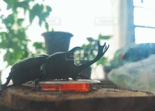 カブトムシの夏休みの写真・画像素材[1381711]