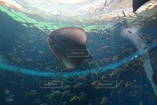 水面下を泳ぐ魚たちの写真・画像素材[1382276]