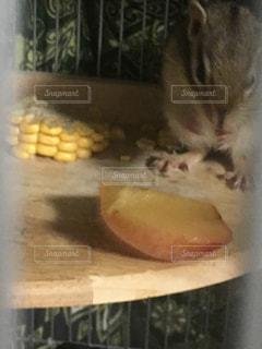 カメラを見て齧歯動物の写真・画像素材[1382496]