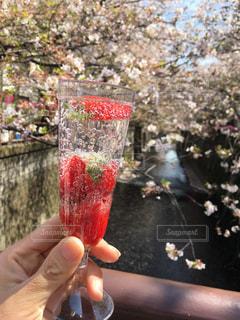 目黒川沿い花見 いちごシャンパンで乾杯の写真・画像素材[1383517]