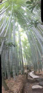 鎌倉の竹林 報国寺の写真・画像素材[1383764]