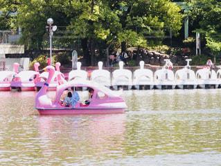 東山動物園スワンボートの写真・画像素材[1389214]