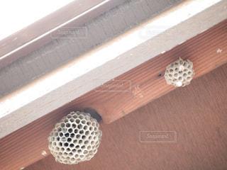 蜂の巣の写真・画像素材[1389437]