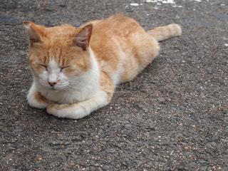男木島のネコの写真・画像素材[1391653]