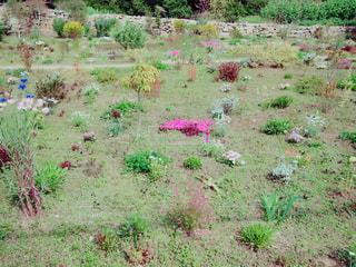 犬島の庭の写真・画像素材[1398396]