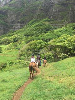 丘の上で馬に乗る人の写真・画像素材[1383544]
