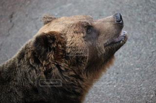 熊の写真・画像素材[1844702]