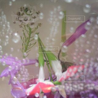 花と気泡の写真・画像素材[1384001]