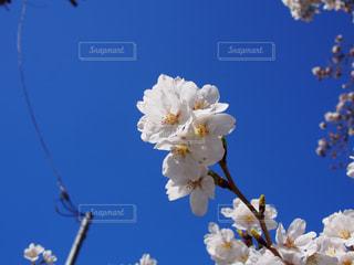 近くの花のアップの写真・画像素材[1507599]