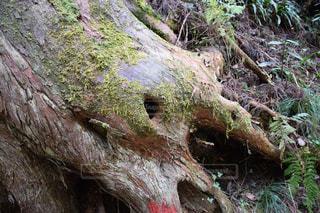 近くの木のアップの写真・画像素材[1696711]