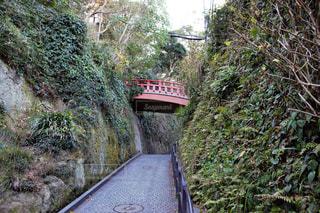 下り列車を走行する列車は森の近く追跡します。の写真・画像素材[1767993]