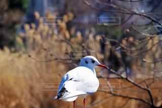 枝に座っている小さな白い鳥の写真・画像素材[1804346]
