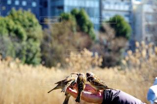 草の上に座っている鳥カバー フィールドの写真・画像素材[1819270]