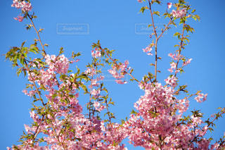 木の上の紫の花のグループの写真・画像素材[1838427]