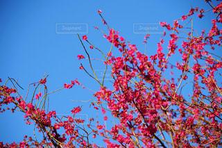 木の上に座っている鳥の群れの写真・画像素材[1838431]