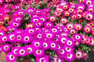 花の写真・画像素材[2059519]