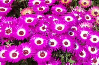 花の写真・画像素材[2059525]