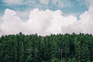 森と雲と空の写真・画像素材[1384258]