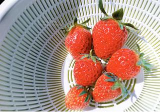 ふぞろいの朝摘み苺たちの写真・画像素材[3164829]