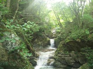 森の中の大きな滝の写真・画像素材[1384481]