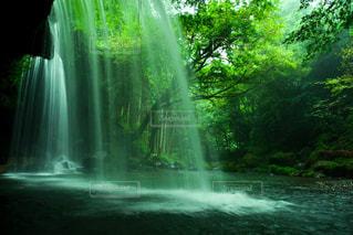 裏見の滝の写真・画像素材[1388660]