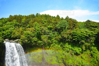 森の中の大きな滝の写真・画像素材[1388702]
