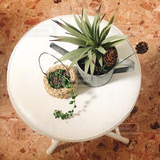 グリーンネックレスと観葉植物の写真・画像素材[1391988]