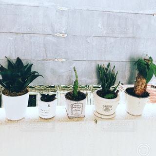 我が家のミニ植物たちの写真・画像素材[1399632]