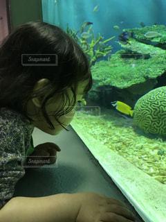 魚に見入る子どもの写真・画像素材[1384772]