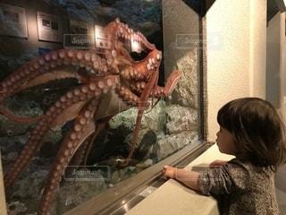 水族館のたこさんと子どもの写真・画像素材[1384830]