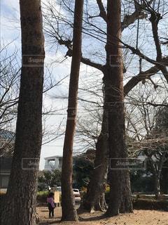 公園の大きな木の写真・画像素材[1384839]