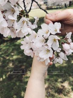 桜が咲いたらの写真・画像素材[1386230]