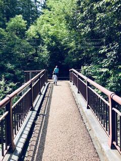 夏の森の中の橋の写真・画像素材[1386670]