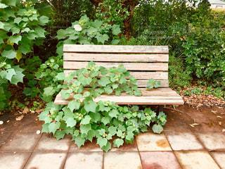 草花が占領したベンチの写真・画像素材[1453941]
